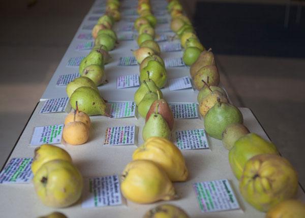 Rückblick Apfelernte & Förderung für die Streuobstwiese