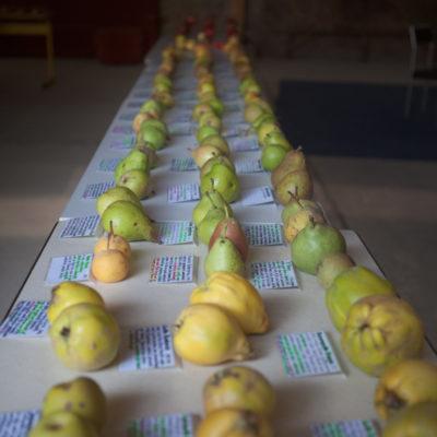 250 verschiedene Apfelsorten