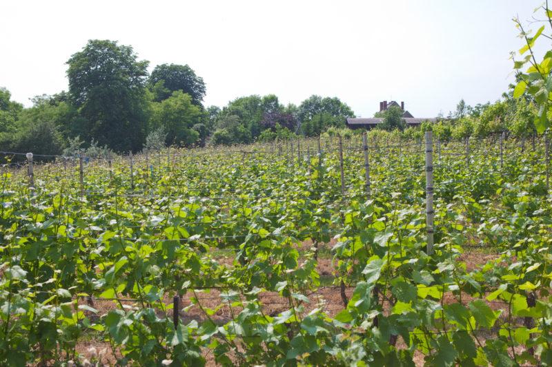 Wein rockt – Posa lockt