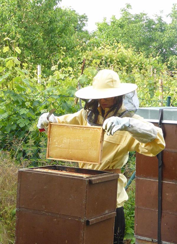 Die ersten Bienen finden sich auf Kloster Posa ein